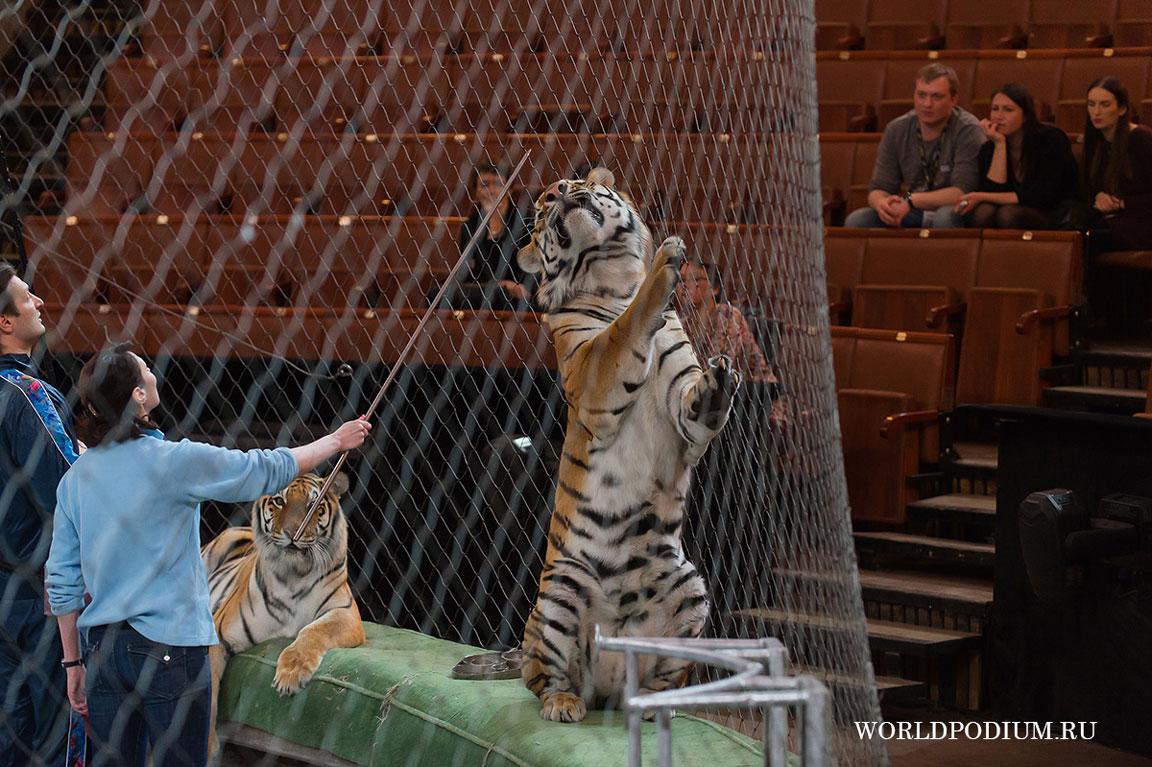 помощь картинки рысь и тигры у ног моих сели окружной военный суд