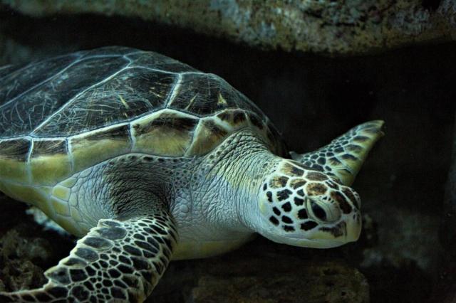 «Москвариум» на ВДНХ показал подводный мир глазами черепахи