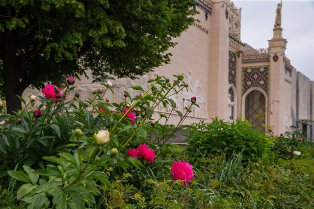 На ВДНХ начался сезон цветения пионов