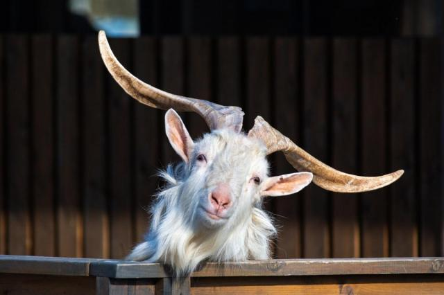 ВДНХ запустил мини-сериал о жизни животных на «Городской ферме»