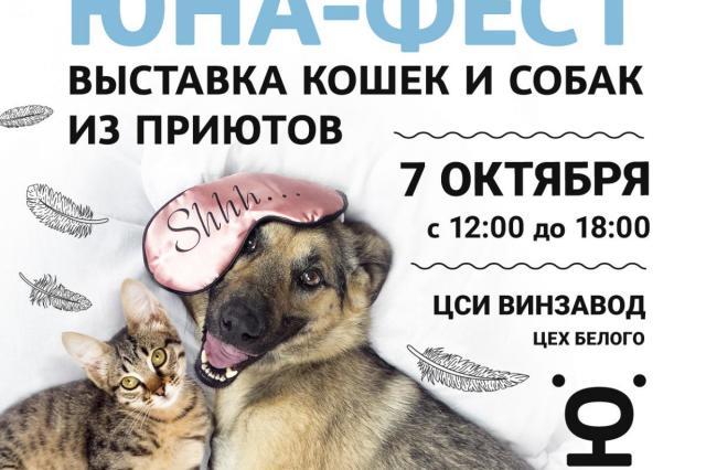 Центр реабилитации временно бездомных животных «Юна» проведет 10-ю Юбилейную выставку-пристройство собак и кошек из приютов