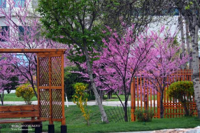 «Если в твоей душе осталась хоть одна цветущая ветвь, на неё всегда сядет поющая птица», - весна в Ташкенте!