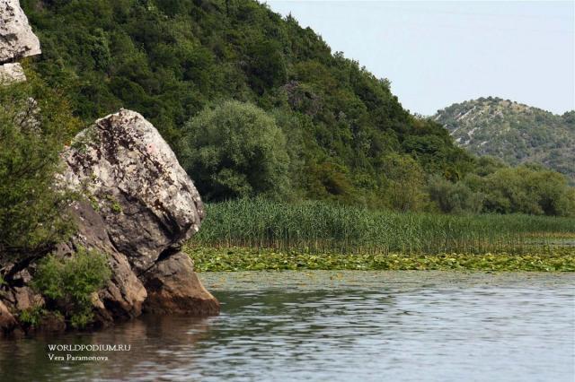 Скадарское озеро - крупнейшее на Балканском полуострове
