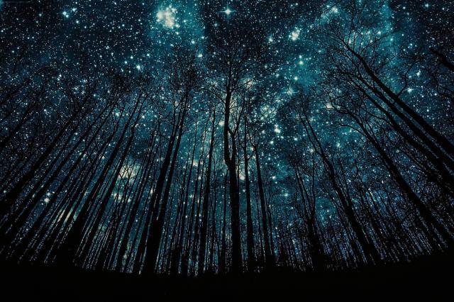 С 11 по 13 августа в Москве можно будет увидеть самый яркий звездопад года