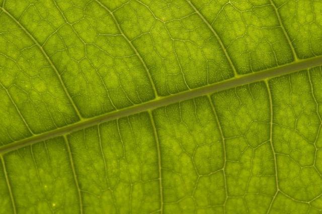 В Китае создали материал для генерации энергии на основе фотосинтеза