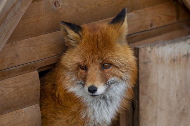 Московский зоопарк открывается для посетителей