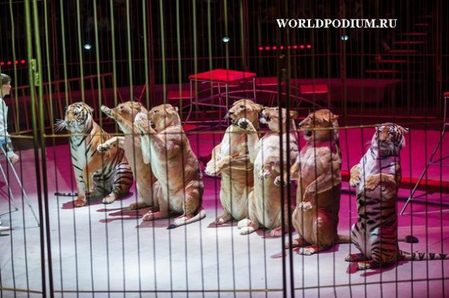 Всемирный фестиваль циркового искусства «ИДОЛ-2016» -  грандиозные аттракционы, не подвластные воображению!