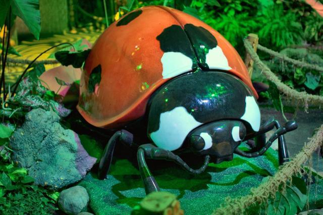 В Московском зоопарке поселятся гигантские насекомые!
