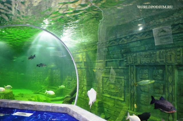 Открытие «Крокус Сити Океанариума» - многоликая фауна Земли!