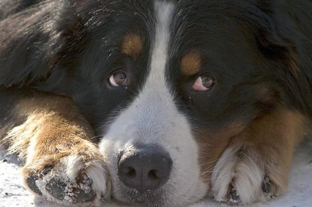 Нейросеть теперь может предсказывать поведение собак