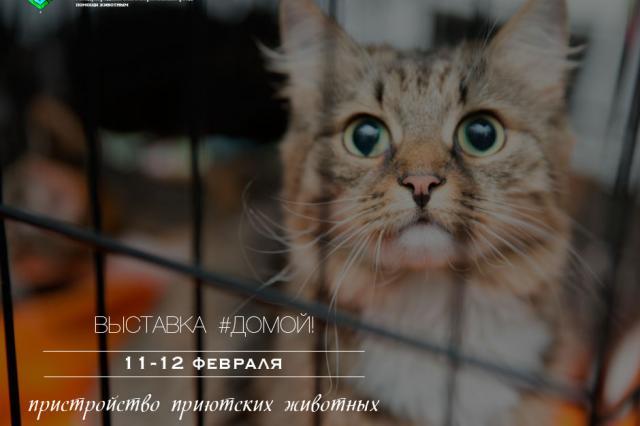 Благотворительная акция по пристройству приютских животных