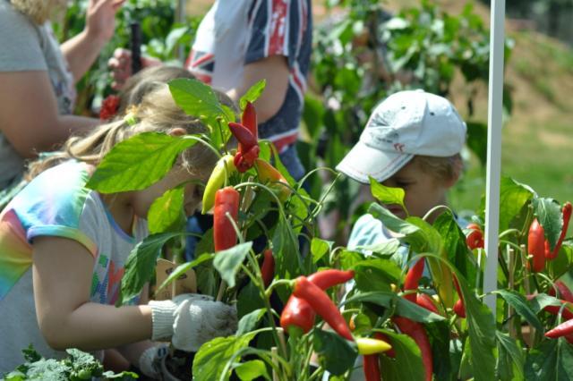 Открылся первый в Москве «Сенсорный огород»