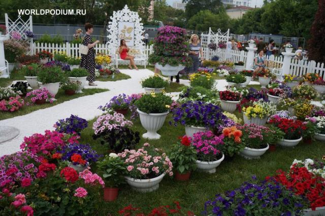 Новый сорт гортензии представят на фестивале Moscow Flower Show
