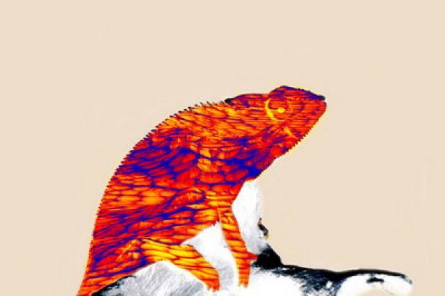 «А-Студио» показали кислотных «Хамелеонов»
