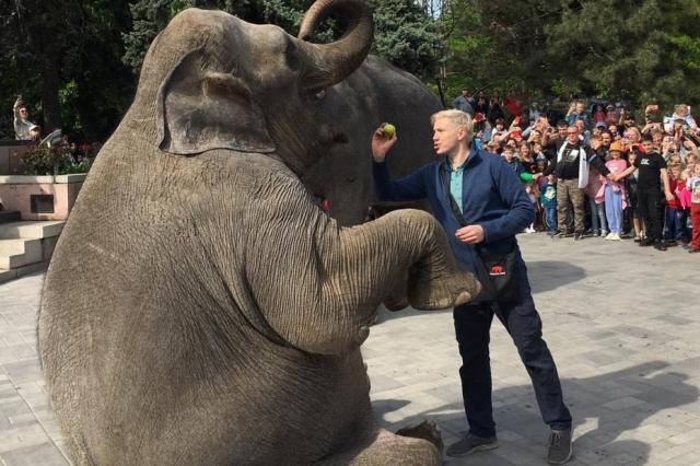 Сколько весит слон?