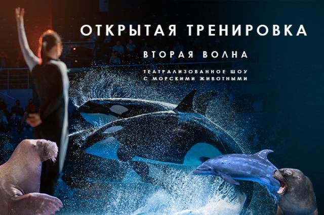В «Москвариуме» впервые проведут открытые тренировки морских животных