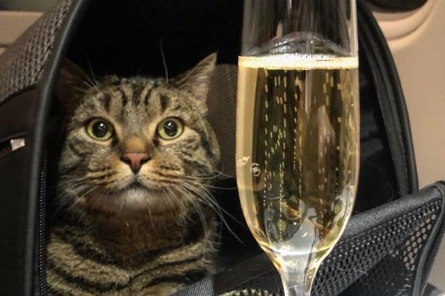 Слишком толстого кота не пустили в самолет в аэропорту Шереметьево
