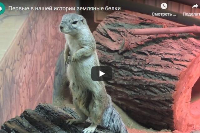 Первые в истории Московского зоопарка земляные белки