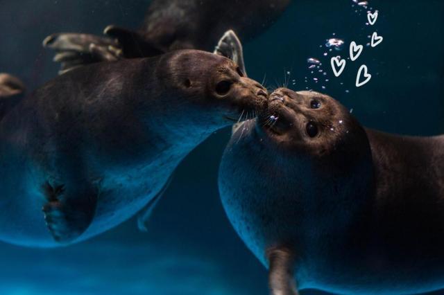 «Океан любви» в «Москвариуме»: праздничная программа 13 и 14 февраля