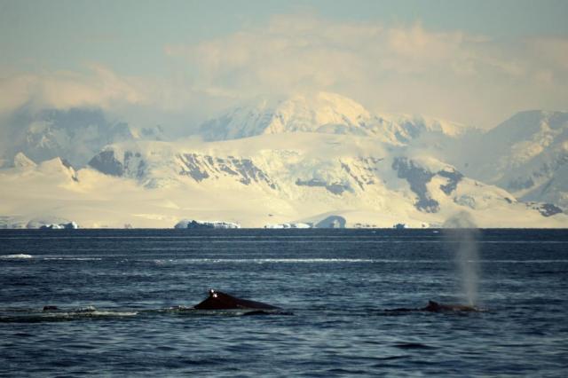Исследователи обнаружили в Антарктиде жизнь под толщей льда