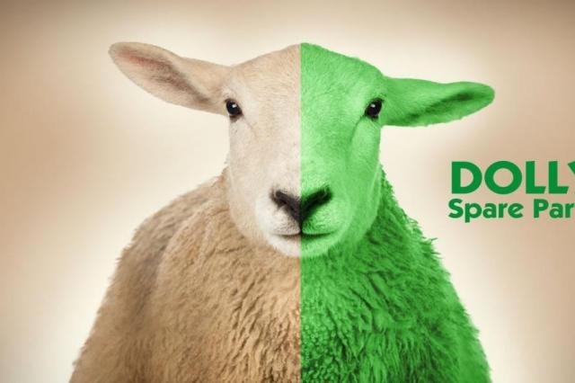 Помните овечку Долли?