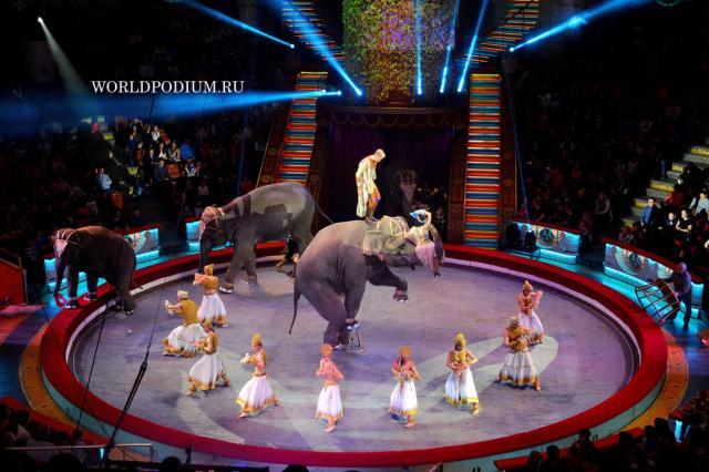 Виртуозный ансамбль гигантских Слонов Династии Корниловых!