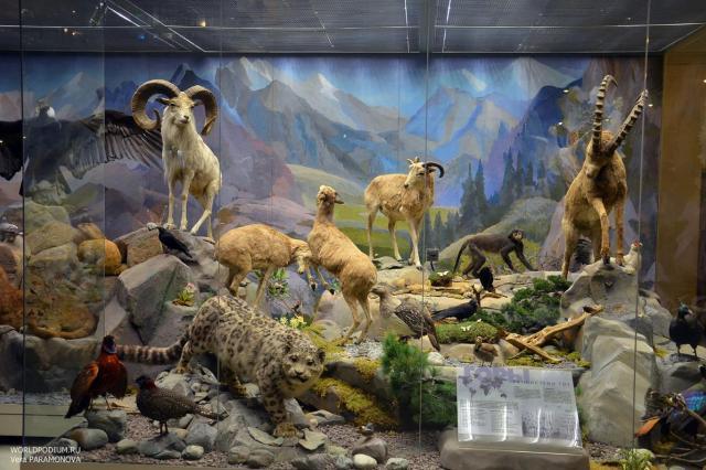 Дарвиновский музей - путешествие по разным этапам теории эволюции