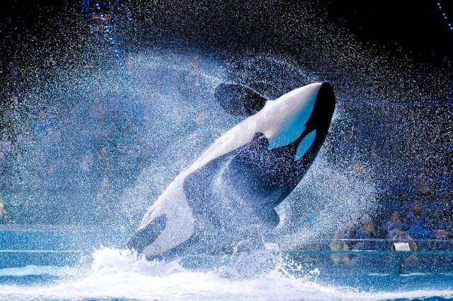 В «Москвариуме» на ВДНХ открывается интерактивная выставка морских млекопитающих