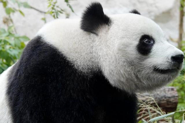 Как стать виртуальным гостем Московского зоопарка