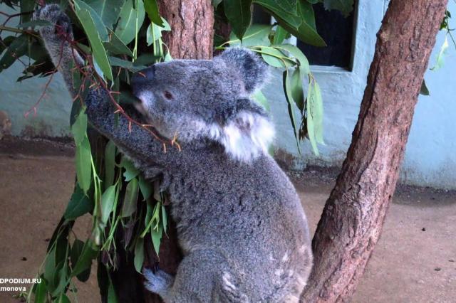Далёкая и близкая Австралия: чем дальше и таинственнее, тем интереснее!