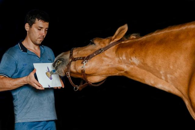 Рисунок от лошади