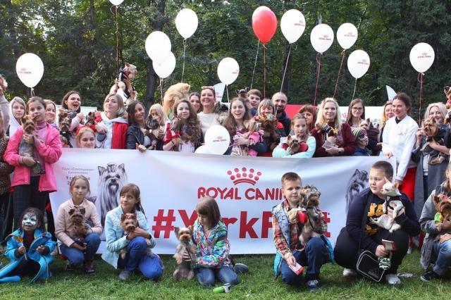 В Москве прошел первый городской фестиваль, посвященный йоркширским терьерам