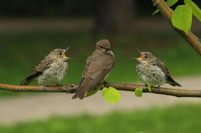 На территории ВДНХ и в парке «Останкино» начали гнездование птицы, занесенные в Красную книгу Москвы