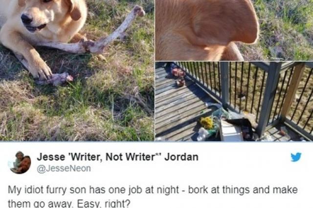 В Канаде проницательный медведь подкупил домашнего пса