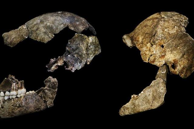 Российские ученые «оживили» вымерших 300 тыс. лет назад древних людей