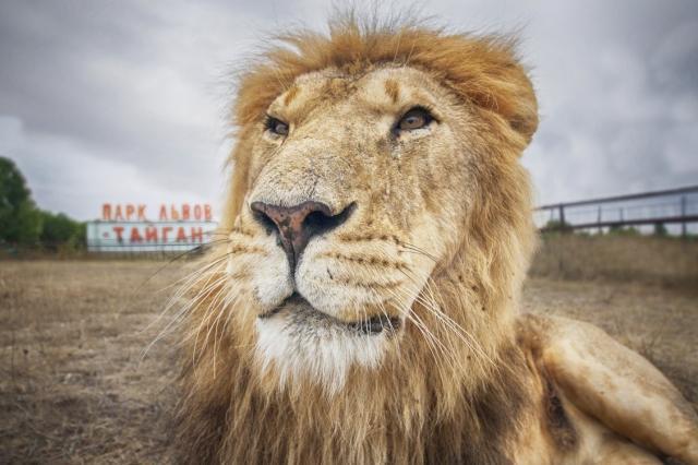 Животные-пенсионеры переехали в сафари-парк «Тайган»