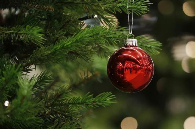 Ученые научились превращать новогодние елки в сладости