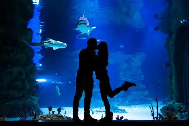 Романтические выходные на ВДНХ: программа ко Дню всех влюбленных