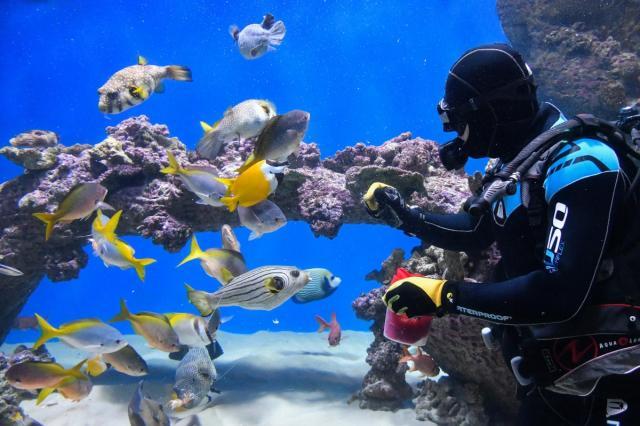 День космонавтики в «Москвариуме»: научно-познавательная лекция и поздравление от водолазов