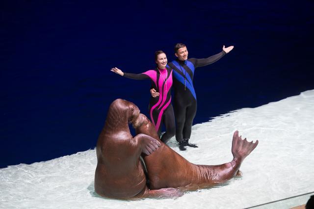 Русалочка, морской огурец и амурская морская звезда: «Москвариум» на ВДНХ приглашает на Всемирный день моря