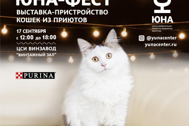 Центр реабилитации временно бездомных животных «Юна» проведет выставку-пристройство кошек из приютов