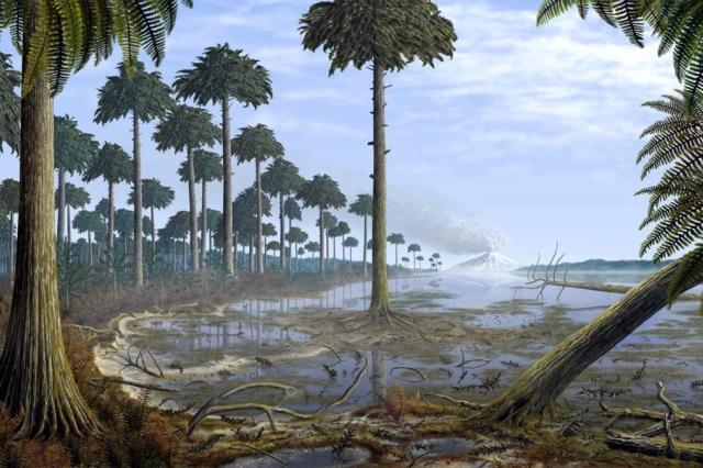 Обнаружены останки древнейших лесов на планете