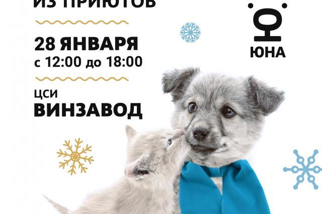 Выставка кошек и собак из приютов «Юна-Фест» на территории ЦСИ «Винзавод»