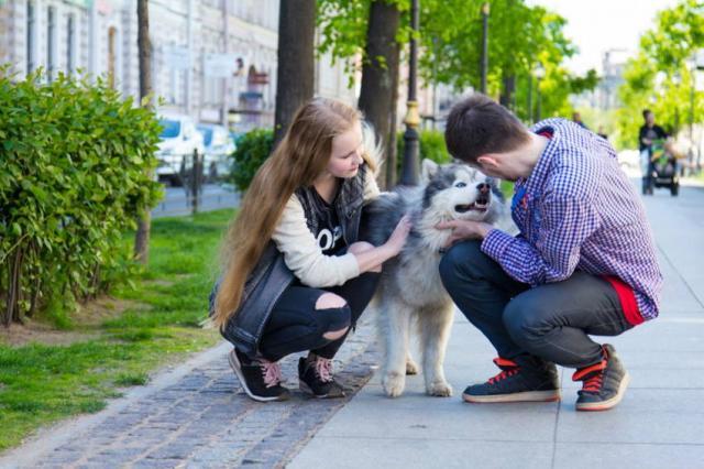 «Хаски в городе» - проект о культуре общения людей и собак