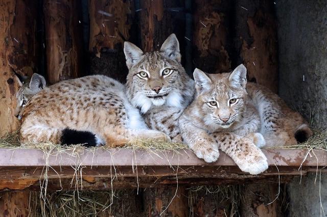 Московский зоопарк перешёл на зимнее расписание