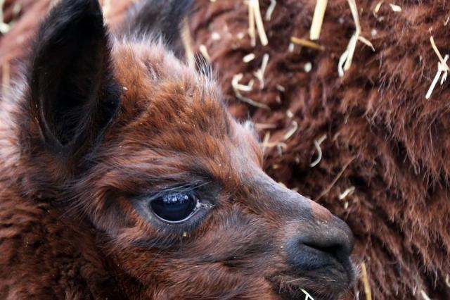 Московский зоопарк начинает летний цикл бесплатных лекций «Человек и животные»