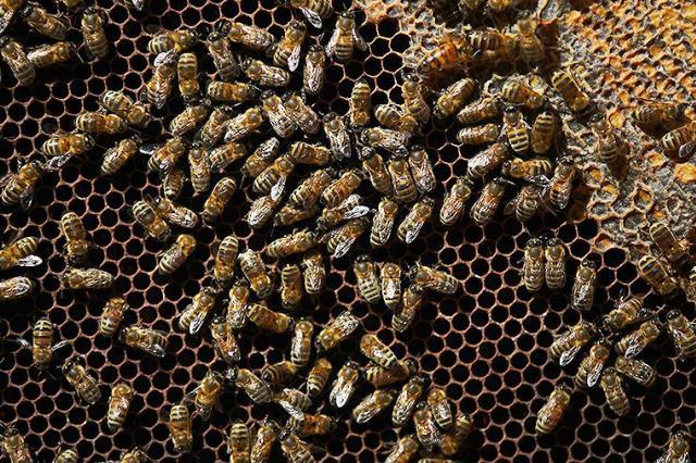 Ученые узнали о способности пчел считать