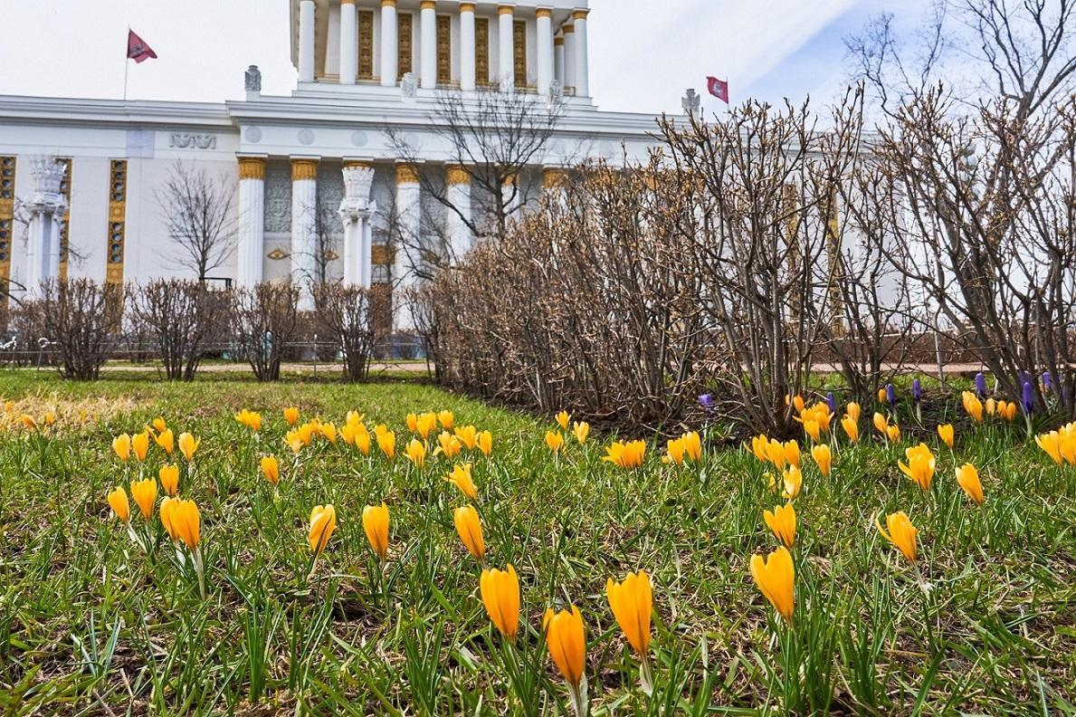 Сюрпризы природы: на ВДНХ на две недели раньше распустились цветы