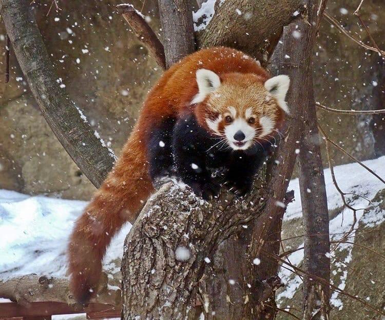 В Московском зоопарке открылись павильоны