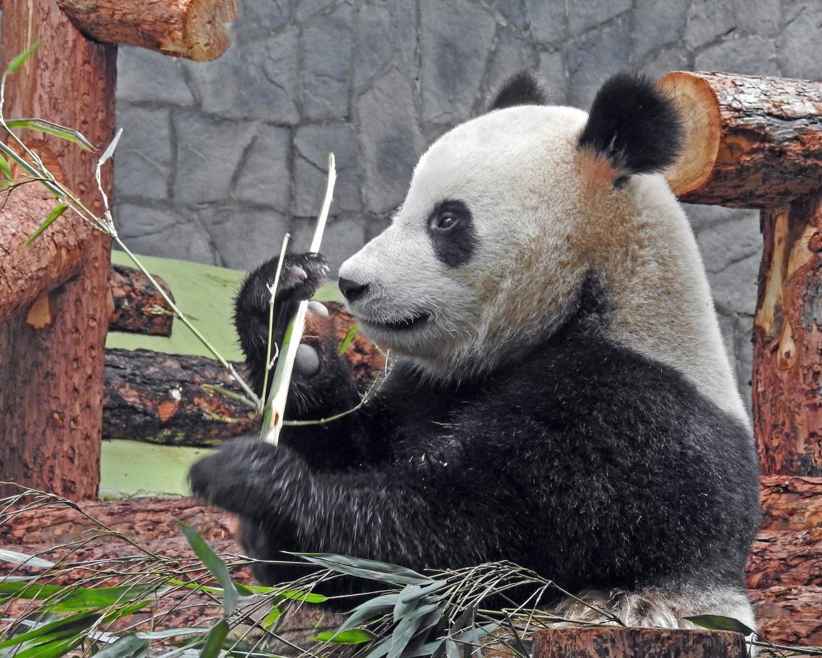 Московский зоопарк поменял режим работы и открыл еще один вход